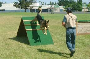 TrainingSchutzhundRetrieveOverWall